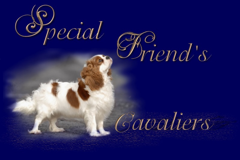 Welcome to Special Friend's Cavaliers